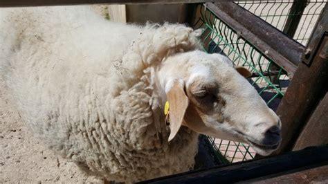 petting farm ta qali malta top tips