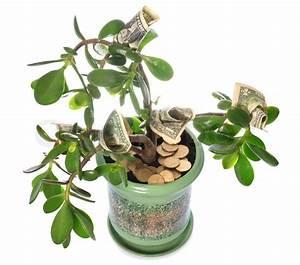 Geldbaum Feng Shui : potted stammwerk crassula mit dollarnoten in bl tenform auf wei em stock foto ~ Bigdaddyawards.com Haus und Dekorationen