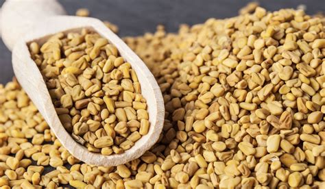 Top 10 Fenugreek Health Benefits That You Should Know