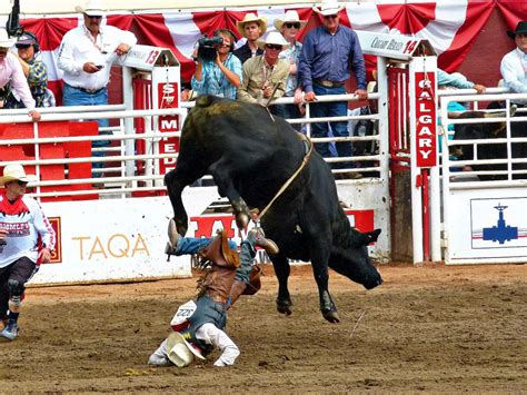 Free photo: Stampede, Calgary, Bull Riding - Free Image on ...