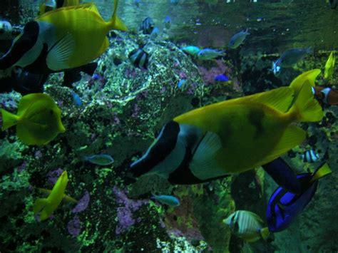 2005 l aquarium de lyon myopathe ch