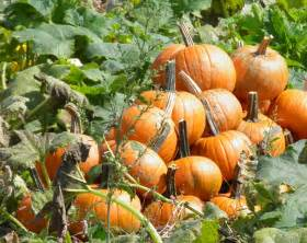 Fall Leaves Pumpkins