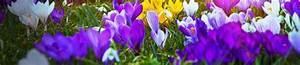 Blumen Und Ihre Bedeutung : sprache der blumen die bedeutung der sch nsten blumen ~ Frokenaadalensverden.com Haus und Dekorationen
