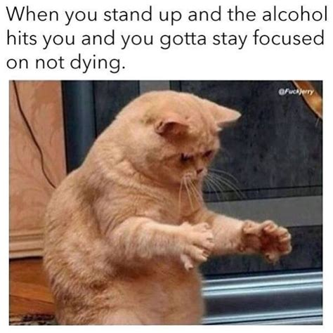 hangover memes     true sayingimagescom