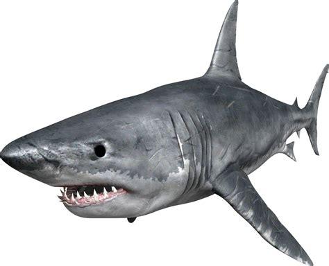 Shark Image Hq Shark Png Transparent Shark Png Images Pluspng