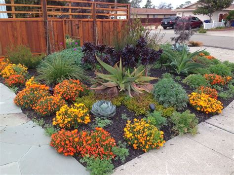 drought tolerant plants for northern california sacramento