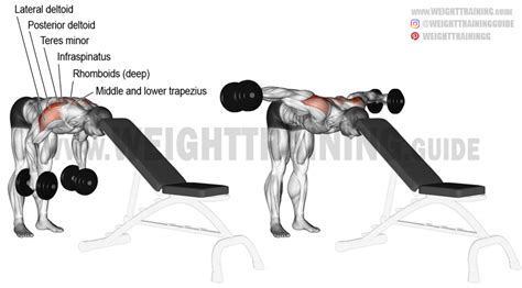 Rear Pec Deckbent Over Lateral Raises by Head Supported Bent Over Dumbbell Lateral Raise Exercise