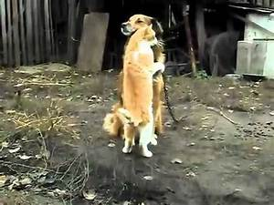 Cute love story dog and Cat - YouTube