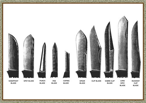names of kitchen knives knife terminology great eastern cutlery