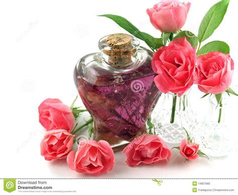 light pink after light pink roses after stock image cartoondealer