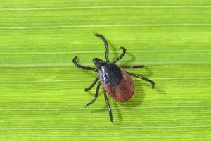 parasiten krankheitserreger vorkommen krankheiten