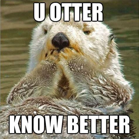 Otter Love Meme - upset otter memes quickmeme funny pinterest otter meme otter and meme