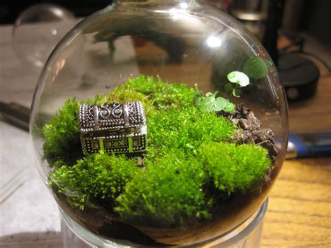 where to buy moss for terrariums treasure chest and moss terrarium elias gayles flickr