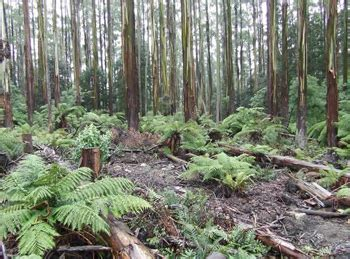 What Is Deforestation?  Causes And Effects Of Deforestation