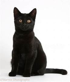 4 black cat anime black cat wallpapers desktop phone tablet