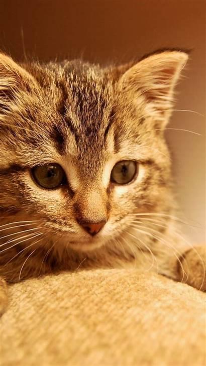 Kucing Lucu Gambar Android Wa Whatsapp Untuk