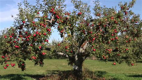 Fast Growing Fruit Trees For Sale Youtube
