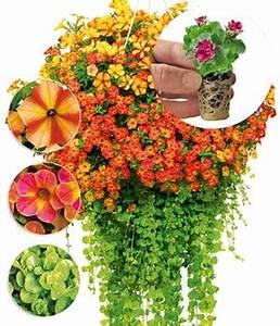Petunien Samen Kaufen : petunien easyplant online kaufen bestellen bei baldur garten ~ Michelbontemps.com Haus und Dekorationen