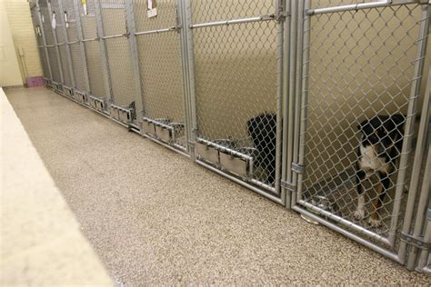 what is the best flooring for pets dog kennel flooring kenneled dogs floors