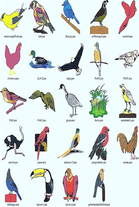 pics for gt types of birds with names