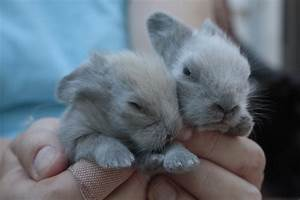 Who Doesn't Love Baby Bunnies and Kittens–Beth Trissel ...