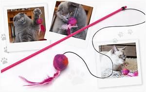 Katzenspielzeug Selber Machen Karton : anleitung katzenspielzeug selber machen buttinette blog ~ Frokenaadalensverden.com Haus und Dekorationen