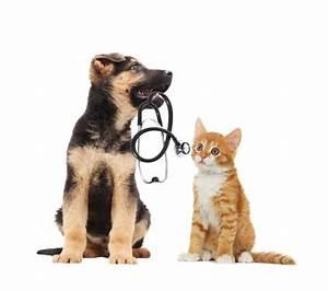 Il Est Garanti : a partir de quelle date votre animal est il garanti votre courtier en assurances auto ~ Medecine-chirurgie-esthetiques.com Avis de Voitures