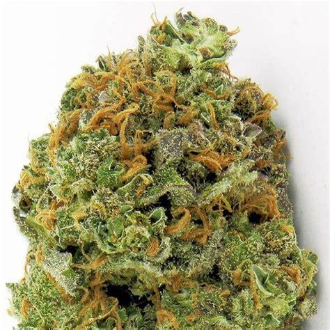 seeds express wipeout auto heavyweight cannabis strain feminised strains fast very info seed seedfinder marijuana feminized weed seedsman hitting producing