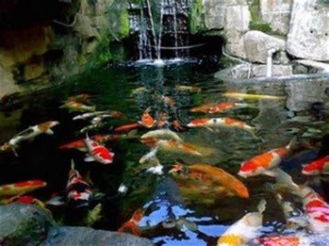 membuat kolam ikan koi desain kolam ikan koi minimalis