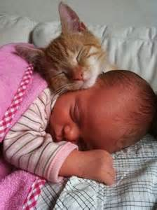 cats and newborns cat and baby sleeping pictures photos and images for
