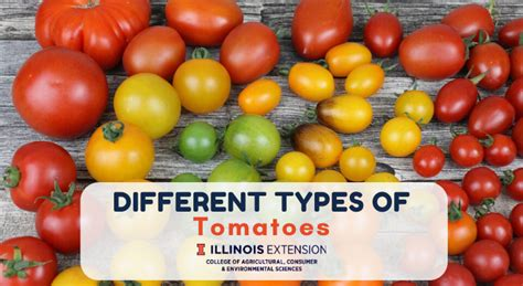 Different Types of Tomatoes: University of Illinois Extension