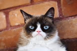 cats pictures grumpy cat realgrumpycat