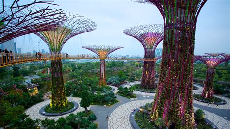 gardens by the bay singapore gardens by the bay pictures view photos images of