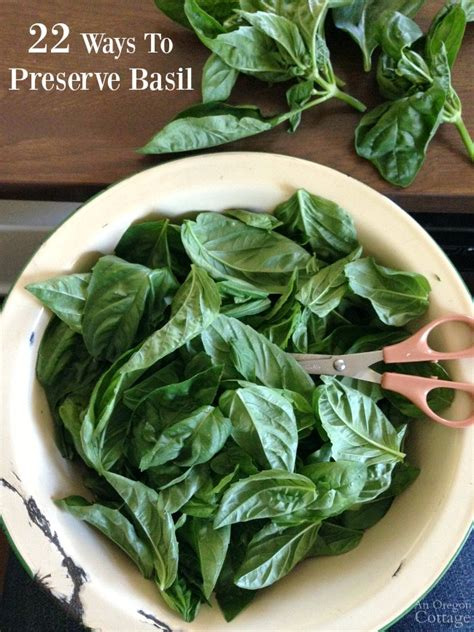 preserving basil 22 ways to preserve basil pesto isn t one of them page 2 of 2