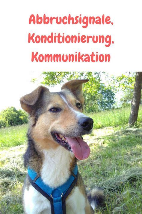 Glueckliche Haustiere Sauberkeit Und Erziehung by Korrekturen In Der Hundeerziehung Erziehung Und