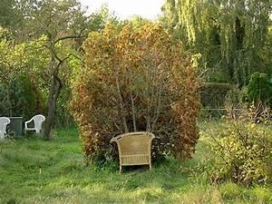 Mulchen Mit Grasschnitt : herbstarbeiten im garten ernten abr umen mulchen planen ~ Lizthompson.info Haus und Dekorationen