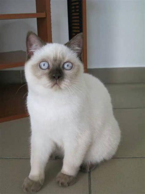 quanto vivono i gatti persiani dimensioni casa e numero gatti gatto