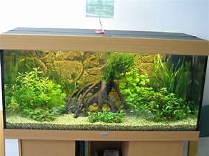 Warum Sind Pflanzen Grün : warum wachsen auf der linken seite die pflanzen nicht richtig aquarium forum ~ Markanthonyermac.com Haus und Dekorationen
