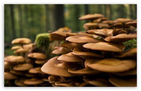 Forest Mushrooms 4k Hd Desktop Wallpaper For 4k Ultra Hd