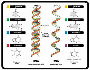 Dna  Definition  Structure  U0026 Discovery