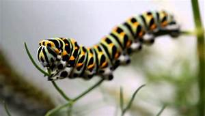 colorful caterpillar - eating - YouTube