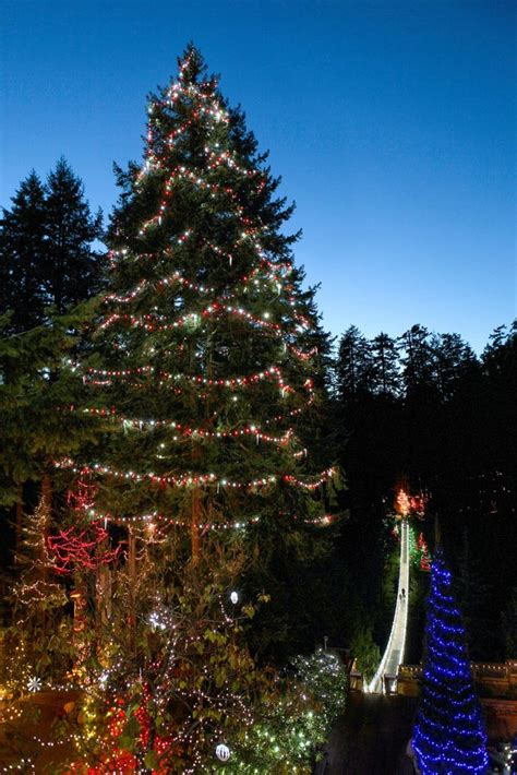Christmas Trees Vancouver Wa by World S Tallest Living Christmas Tree Capilano Suspension