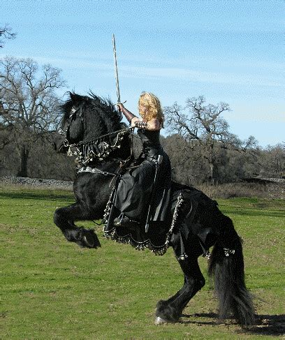 horse medieval war horses breaking history friesian riding costumes tack destrier knights armor historic gear