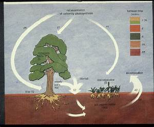 Global Carbon Cycle NASA - Pics about space
