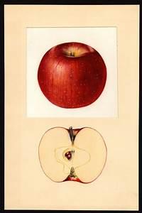 Haralson  Apple