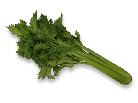 comment cuisiner celeri comment éplucher une branche de céleri foodette