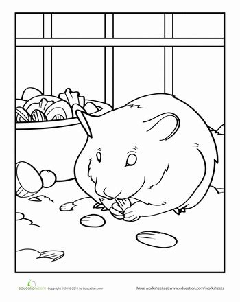 Check out our fun hamster facts for kids. Hamster | Worksheet | Education.com | Coloring pages, Hamsters as pets, Cute sketches