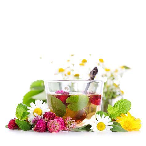 5 čajeva koje uvek treba imati u kući   Herbal recipes ...