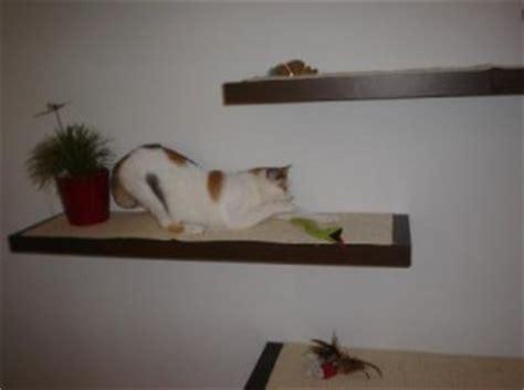 Wandbretter Für Katzen by Statt Kratzbaum Design Katzenwand