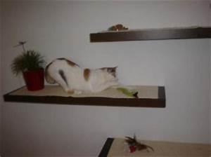 statt kratzbaum design katzenwand With balkon teppich mit wenn katzen an tapeten kratzen